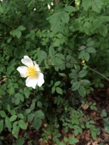 Wortezauber Vision: eine leuchtende Blüte in einem grünen Busch