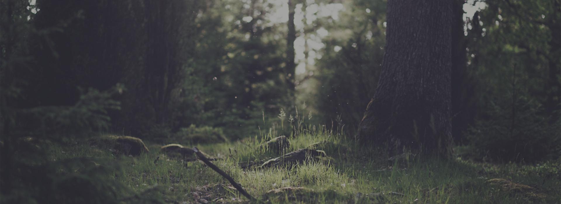 Wortezauber Zauberwald